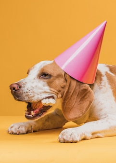 Cachorro usando um chapéu de festa e comer um osso