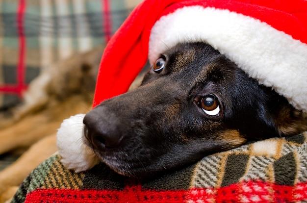 Cachorro usando um chapéu de papai noel