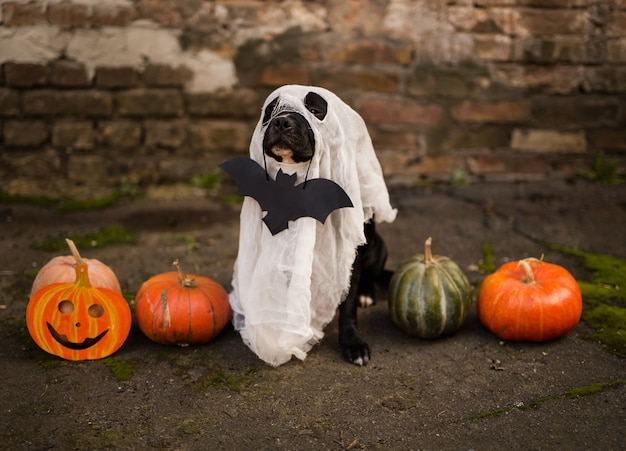 Cachorro vestido com atributos de halloween
