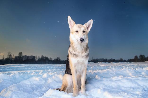 Cachorro vira-lata fofo sentado na neve olhando para a câmera