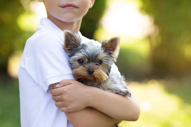Cachorro yorkshire terrier