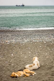 Cachorros deitados na areia à beira-mar