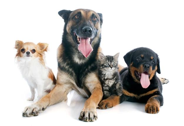 Cachorros e gatinho