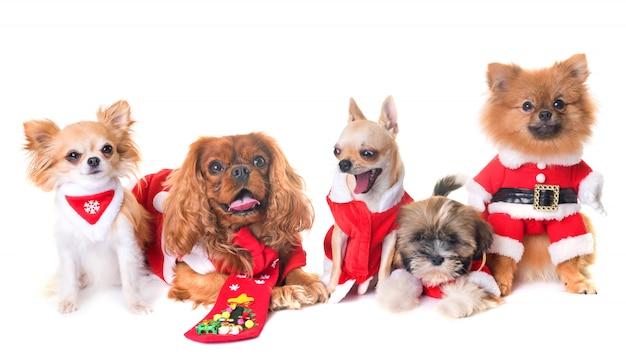 Cachorros e natal