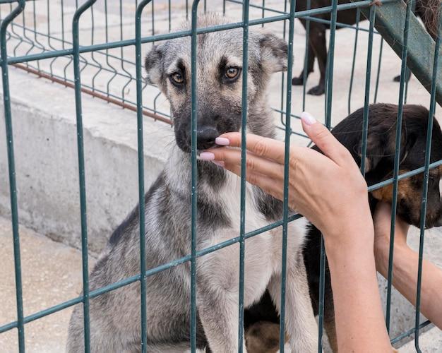 Cachorros fofos atrás da cerca esperando para serem adotados