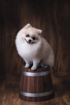 Cachorros fofos pomeranian cachorro sentado em um balde de madeira