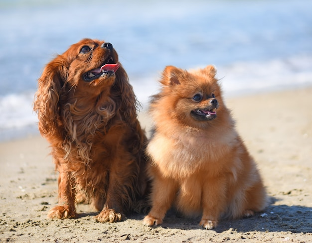 Cachorros na praia