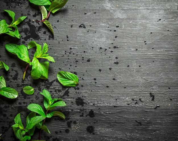 Cachos de hortelã fresca na mesa de madeira preta