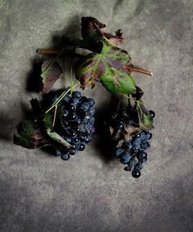 Cachos de uvas pretas com folhas sobre fundo cinza