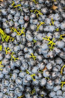 Cachos de uvas pretas fecham-se. vista do topo