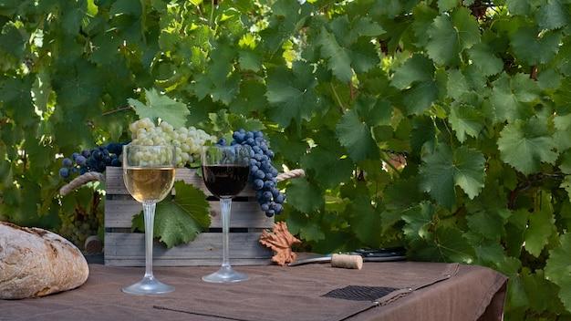 Cachos de uvas tintas e brancas e vinho tinto e branco na vinha