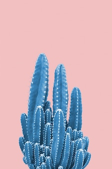Cacto azul em fundo rosa