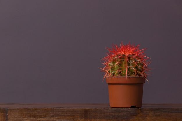 Cacto com espinhos vermelhos em um pop marrom