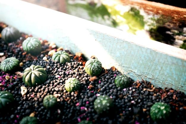 Cacto, crescendo, botânica, natureza, ambiental, espinho, conceito