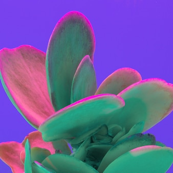 Cacto criativo colorido de néon. arte mínima de cacto. conceito de moda cacto