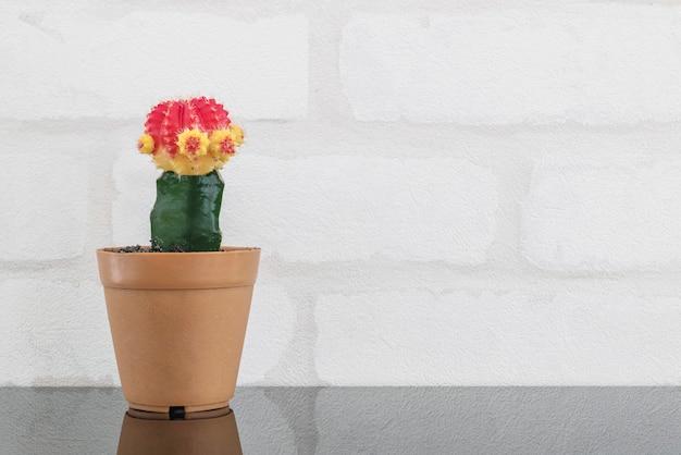 Cacto de cor fresca closeup em pote de plástico marrom para decorar na mesa de vidro preto e parede de tijolo branco texturizado fundo com espaço de cópia