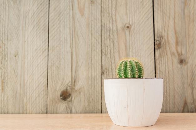 Cacto de echinopsis eirieza no potenciômetro cerâmico rústico branco no fundo de madeira.