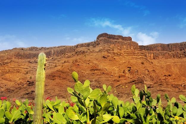 Cacto de gran canaria mogan e montanha vermelha