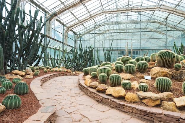 Cacto de jardim botânico tropical