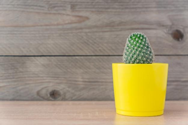 Cacto de mammillaria em vaso de cerâmica amarelo na madeira