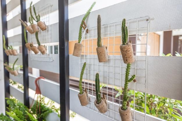 Cacto de plantas em vasos, pendurar na parede