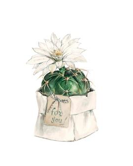 Cacto de presente com flor