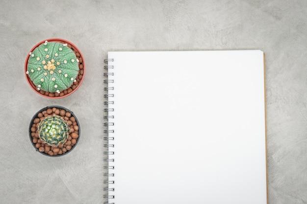 Cacto e caderno sobre a mesa de escritório, fundo de concreto cinza, lay plana