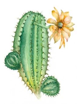 Cacto em flor