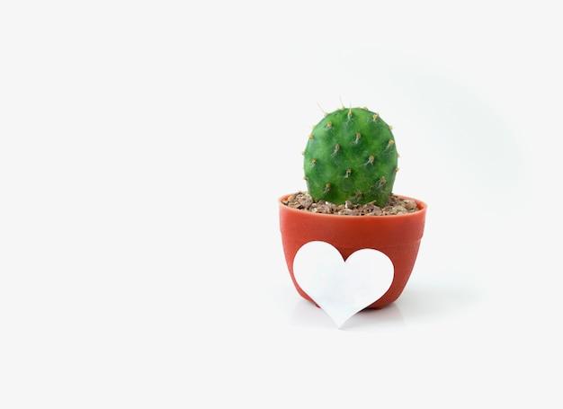 Cacto em pote de plástico com símbolo de coração em branco isolado no branco