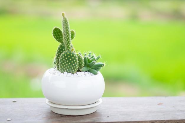 Cacto em um pequeno vaso fofo