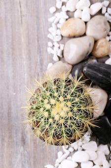 Cacto em vaso com pedras brancas decorativas sobre uma superfície branca