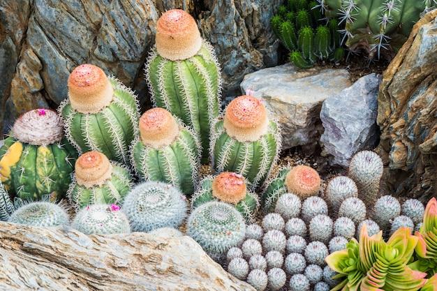 Cacto muitas variantes decoram no jardim selecione e foco suave. fundo de cacto