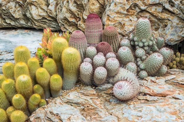 Cacto muitas variantes decoram no jardim selecione e foco suave.