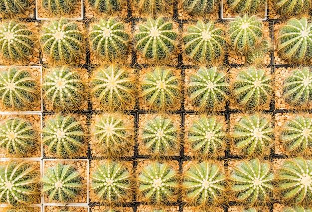 Cacto muitas variantes no pote para o plantio dispostas em linhas selecione e foco suave.