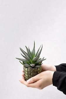 Cacto pequeno no pote de vidro nas mãos da menina na parede dray no quarto. jardinagem em casa. os cactos plantam em vaso no pote verde para a decoração home com espaço da cópia.