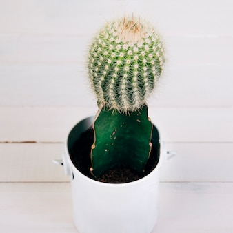 Cacto planta em caneca branca na mesa de madeira