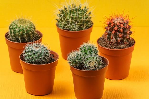 Cacto, planta, em, um, potes