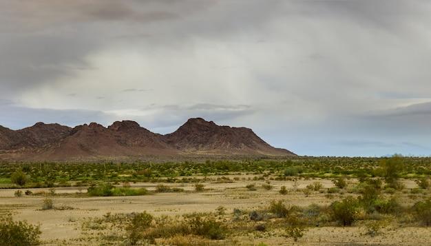 Cacto saguaro no deserto do arizona. montanhas no horizonte oriental do arizona