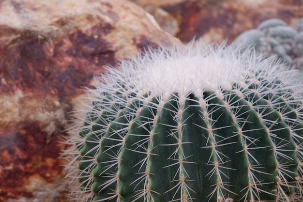Cacto verde do close-up bonito no deserto.