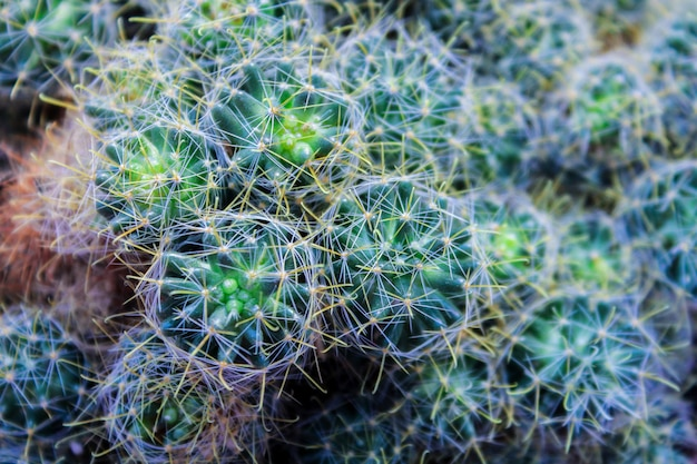 Cacto verde, suculento no parapeito da janela com luz de fundo suave. plantas caseiras no parapeito da janela