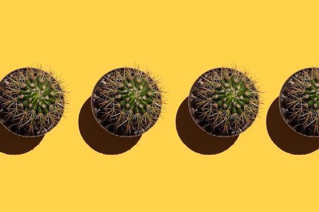 Cactos com agulhas em vasos em um fundo amarelo