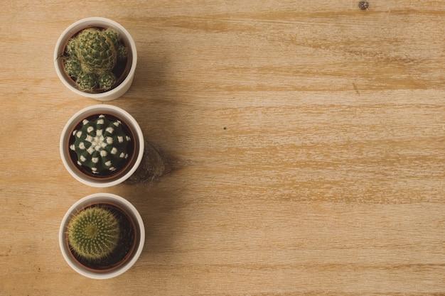 Cactos de árvore em vasos em uma mesa de madeira