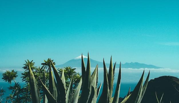 Cactos e plantas em um penhasco perto de uma rocha e uma montanha com topo nevado à distância