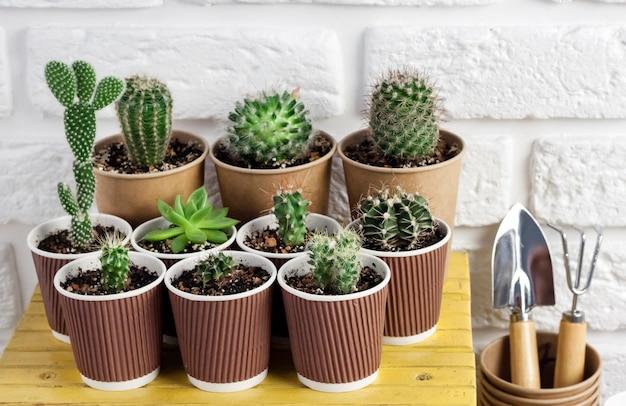 Cactos e plantas suculentas em copos de papel em uma pequena mesa amarela com ferramentas de jardinagem