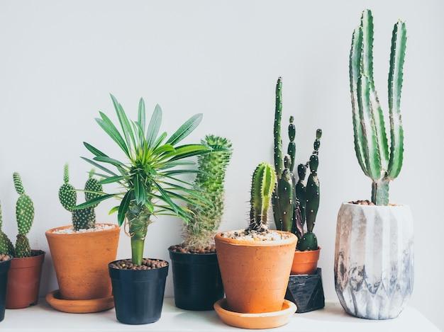 Cactos em vasos de plantas