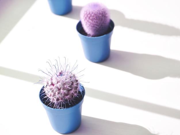 Cactos em vasos na cor lilás. arte contemporânea. design minimalista.