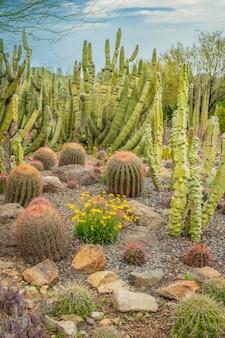 Cactos mistos no deserto