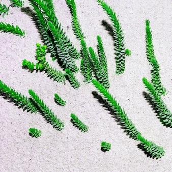 Cactos no deserto arte design minimalista