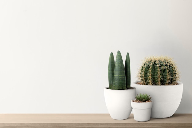Cactos pequenos com fundo branco na parede