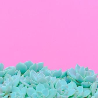 Cactos. suculentos. conceito de amante de cacto. plantas mínimas em arte rosa